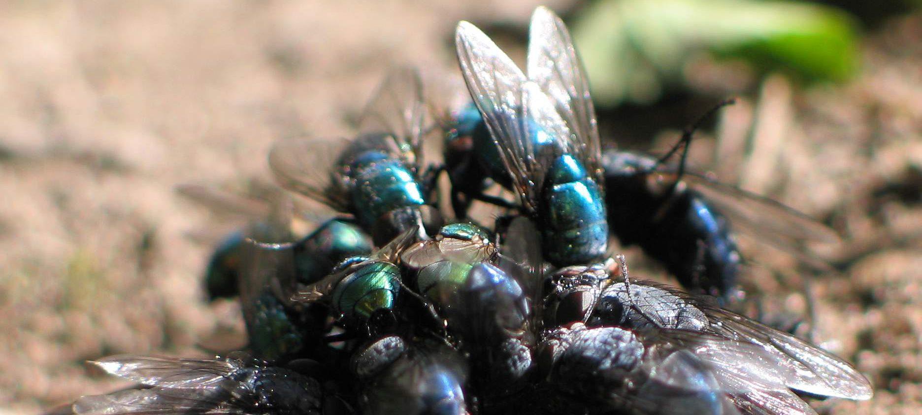INSEKTPOL ® Firma Pest Contol – Dezynsekcja, Fumigacja, Gazowanie, Sprzątanie po zgonie, Zwalczanie kun, warszawa