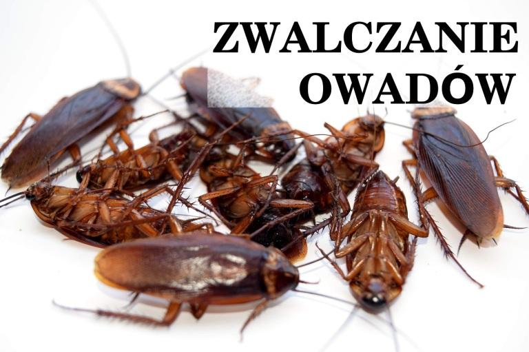 karaluchy zwalczanie