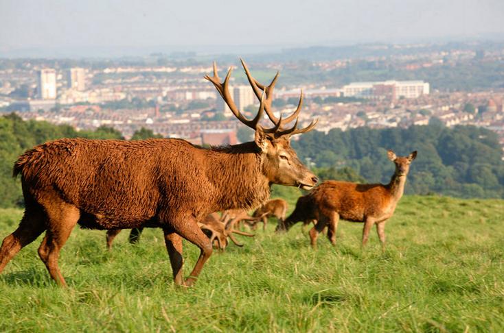 odławianie jeleni cena