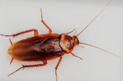 Metoda żelowa na karaluchy wdomu