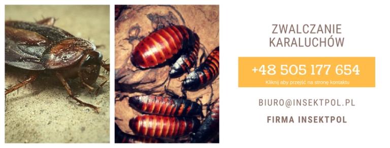 Zwalczanie-karaluchów